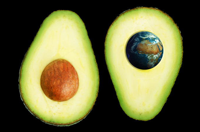 Avocado-Earth